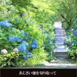 art-season-ajisai-blue